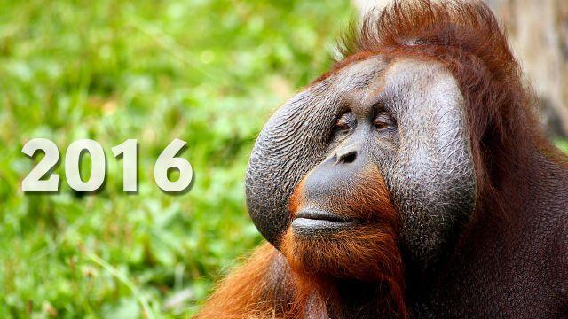Das Jahr des Affen